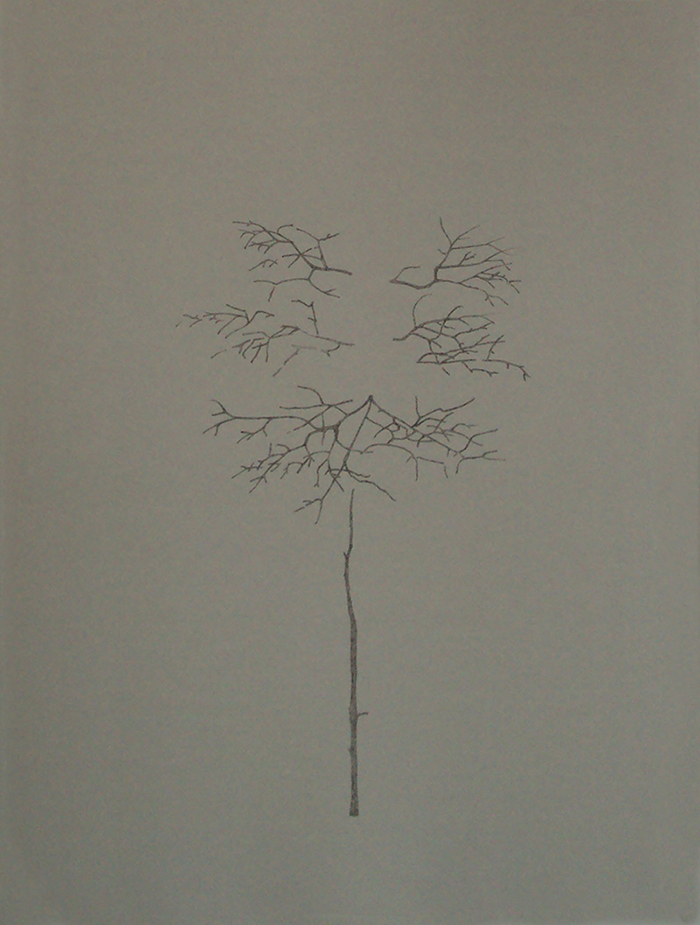 drawing of an alternate leaved dogwood